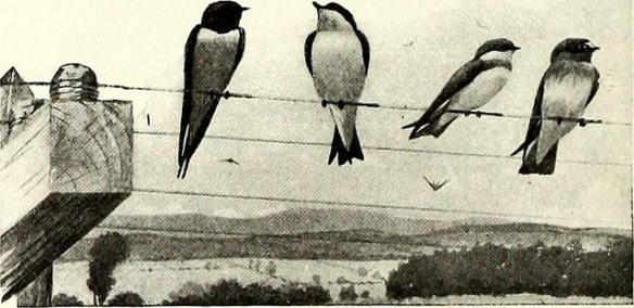 birds_flock