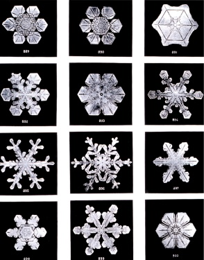 Black and White photo of snowflakes