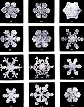 Black and White photo of snowflakes
