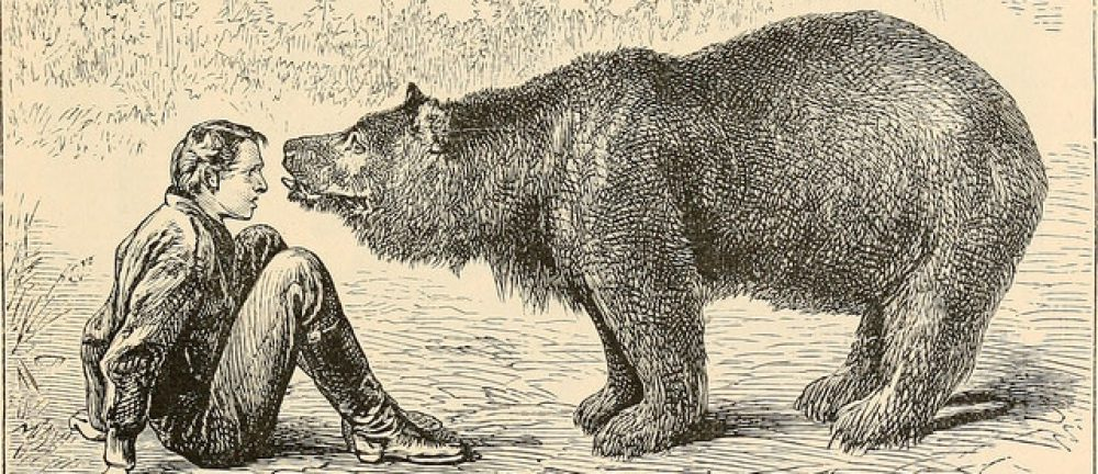 Fardels Bear