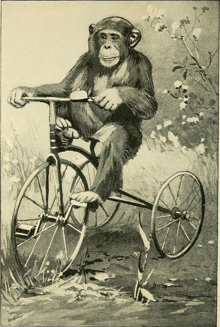 Drawing of a chimp riding a tricycle