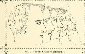 "Sketches of head showing ""Varying Grades of Intelligence"" by associating them with race"